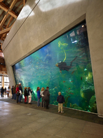 Seattle Aquarium | Mithun